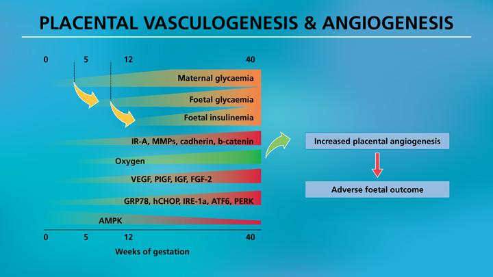 Presentation-_-Insulin-Therapy—Insulin-in-pregnancy—LAST-7