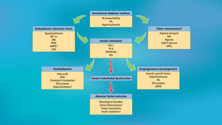 Presentation-_-Insulin-Therapy—Insulin-in-pregnancy—LAST-8